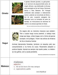 Gineto, Sagui, Malesso